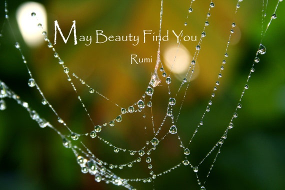 """May Beauty Find You"" ~ Rumi quote (5"" x 7"" photographic greeting card - blank inside/with envelope)"