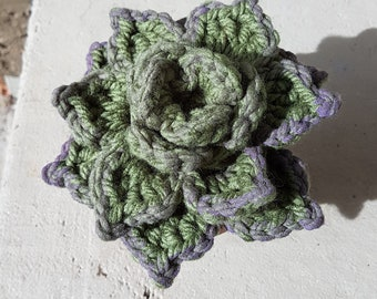 Crocheted Hens & Chicks Succulent - Sage Green 2