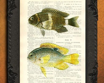 sealife prints - vintage dictionary art print fish print on vintage dictionary page