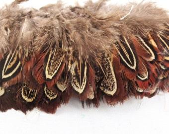 ring neck pheasant church windows natural  RPCW-00 craft feathers,fasinators,