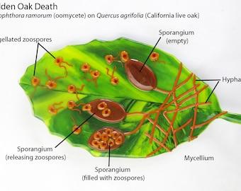 Pick a Plant Pathogen