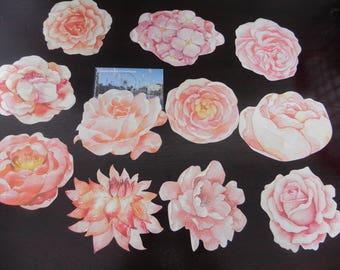 11 postcards depicting flowers minimum 9 cm x 7 cm