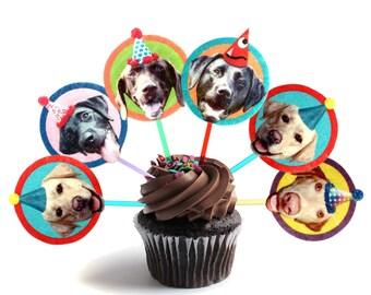 Labrador Dogs Cupcake Toppers - set of 6 - photo reproductions on felt - funny labrador retriever portraits birthday party decor