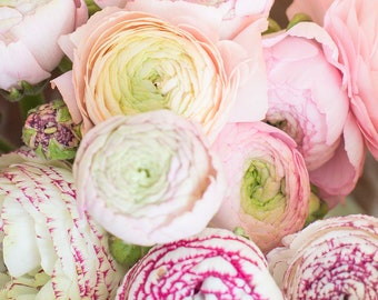 Stock photo /pink flowers