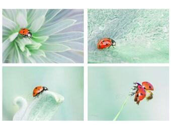 Ladybug, ladybug wall decor photo set - ladybugs pictures photography