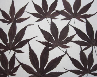 Dried Pressed Flowers Greenery for Crafting - Real Natural Japanese red maple leaves