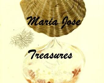 Shells Vintage Illustrations - Digital Download