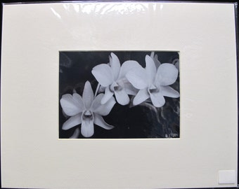 R. Lewis Hooten Uncommon Images Photograph White Orchids Signed and Matted