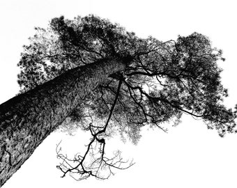 Tree Print - Tree Digital Photo - Monochrome Photo - Branches - Black White Photo - Pine Digital Print - Digital Download - Instant Download
