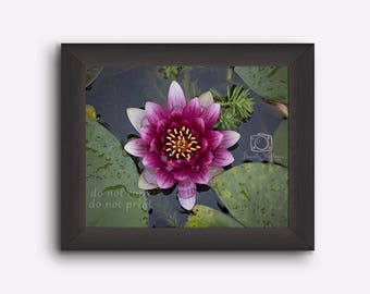 Lily picture, photo of pond lily, Water lily, wall decor, purple flower decor, flower decor, flower wall art, purple flower, room decor