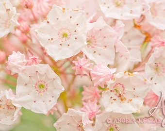 Pink Blossom Photo Canvas, Wall Art, Home Decor  (8x12 / 12x18 / 16x24 / 20x30)