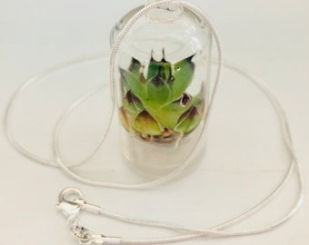 Living Plant necklace - Teenie Tiny Terrarium - living succulent necklace on 24 inch .925 chain
