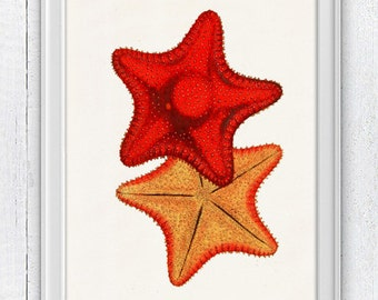 Vintage red starfishes - Bathroom Wall decor , sea life print -Marine  sea life illustration A4 print SAS070