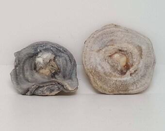 Chalcedony Rose Crystal Specimen