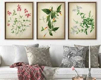 BOTANICAL PRINT SET of 3, Delicate Flower Print Set, Vintage Style Botanical Poster Set, Botanical Wall Art, Flower Poster