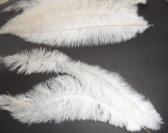 long feathers of ostrich, 2, 35-40cms, natural, soft and sensual.
