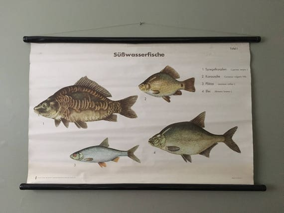 Vintage East German Educational Chart, Roll Down Poster Of A Selection Of Fresh Water Fish By Volk Und Wissen, Berlin