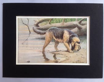 OTTERHOUND hunting DOG Louis Agassiz Fuertes Vintage Mounted 1919 plate print Congratulations Christmas Birthday gift