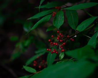 Red berries print