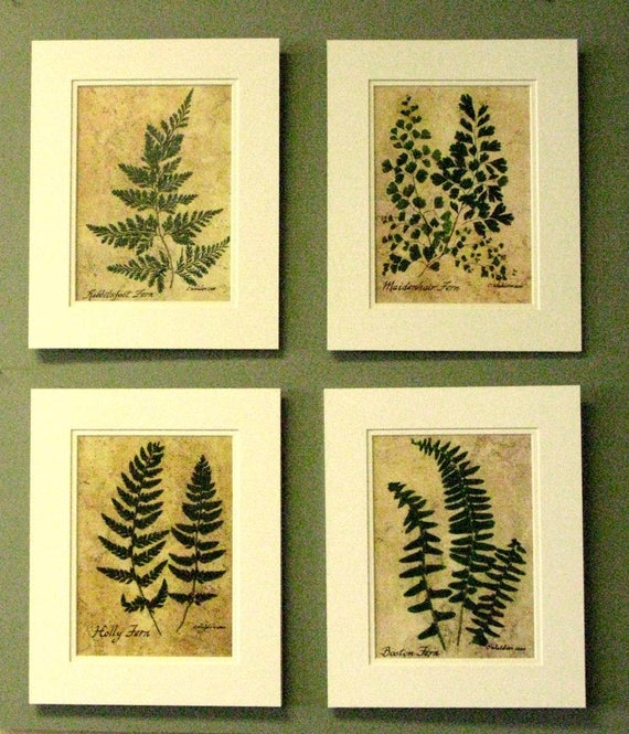 Set of ferns fern art wall art pressed ferns nature ar