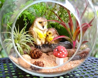 """Owl Terrarium Kit ~ 7"""" Air Plant Terrarium Kit ~ Owl and baby owl on a Log ~ Miniature Garden Kits ~ Fairy Garden ~ Sand choice ~ Gift"""