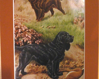 FIELD SPANIEL DOGS Vintage Mounted 1958 spaniel dog plate print with hare Walter A Weber Hunting dogs Unique Christmas Birthday gift