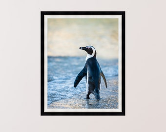 Lone Penguin On Boulders Beach, South Africa - Animal Photography, Prints, Wall Art - Multiple Sizes Available