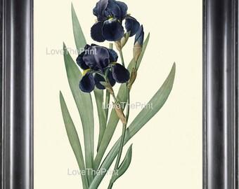 BOTANICAL PRINT Redoute Flower  Botanical Art Print 161 Beautiful Blue Iris Plant Antique Writing Nature to Frame Interior Design