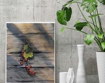 Red Berries Fine Art Print, still life watercolor painting art, berries on rustic wood and sun rays, watercolor wall art print