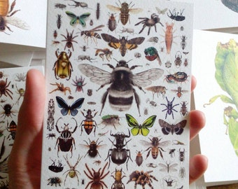 87 Invertebrates - Greetings Card