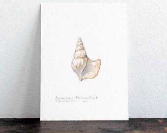 American Pelicanfoot Seashell Original Watercolor Painting