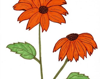 Original Art - Drawing of Orange African Daisies - Prismacolor Markers and Ink - Botanical Art