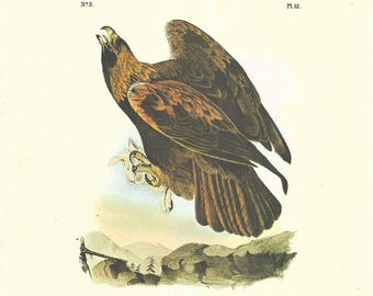 Vintage John James Audobon Double-Sided Book Plate Print - Buzzard and Golden Eagle - Plate 11/12 - Great for Framing