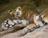 TIGER BABY PHOTO, Safari ...