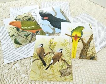 Bird Lovers Stationery, Australian Birds Card Set, Thankyou, Birthday, Altered Book Art, Snail Mail, Invitations, Pen Pal Card, Parrot Card