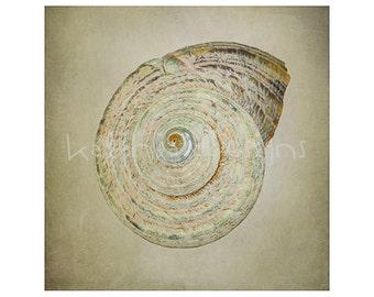 Shell Photographic print, photo fine art print, fine art shell print, bathroom wall decor, shell photo print