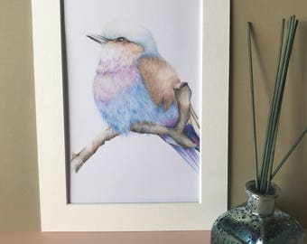 Bird art print, lilac bellied roller, gifts for her, home decor, wall art