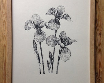 Limited edition screen print 30 x 40cm - hand drawn 'Irises' screen printed in an edition of 50