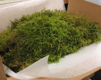 Moss, Live Moss, Fresh Shag , Beautiful Green Fresh Shag.