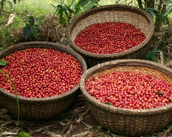 1 pound of fresh roasted Coffee from Sedama, Ethiopia.