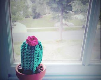 Crocheted Window Cactus
