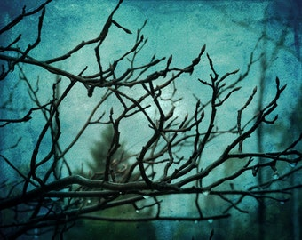 Winter Tree Photograph, Midnight Blue Teal Print, Raindrops on Tree Branches, Ethereal Nature Print In Deep Teal 8x10