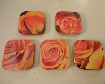 Orange Rose Magnets Set of Five