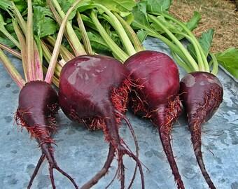 Lutz Long Season Heirloom Beet Seeds Winter Keeper Non GMO Gardening