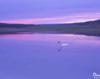 Serenity - Trumpeter Swan Lake Sunset - Photography Wall Canvas Print