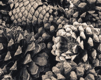 Pine cones photo, sepia pine cone wall art, forest wall art, nature photo, pine tree art, rustic woods print, log cabin forest art, nature