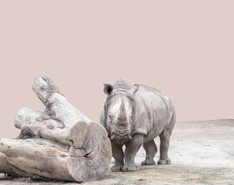 Rhino photo rhinoceros wall art rhino print zoo nursery art animal nursery art zoo animals photo nursery art zoo animal art rhinoceros art