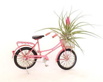 Vintage Pink Bicycle with Air Plant , Mother's Day Gift ,Office Decor ,  Home Decor , Holiday Gift
