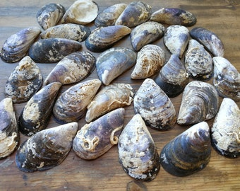 30 Pcs 6,5-7 cm  Large, Blue,  Mussel Shells From Black Sea, blue mussel shells for your crafts, decors, wreaths, jewelleries, MK-004
