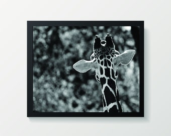 Framed Giraffe Print | Giraffe Poster | Safari Themed Decor | Safari Photography Art |